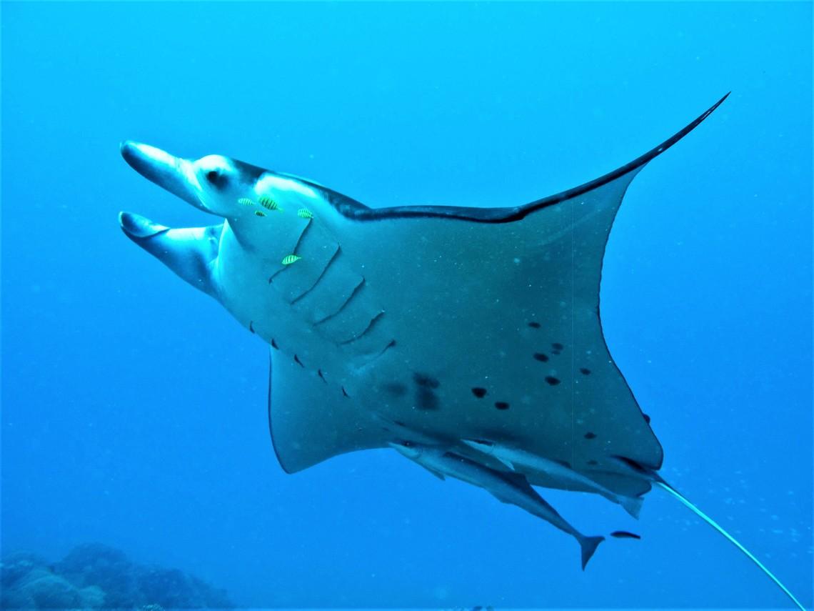 https://tahititourisme.ch/wp-content/uploads/2017/08/Bora-Bora-Reef-Discovery-3.jpg