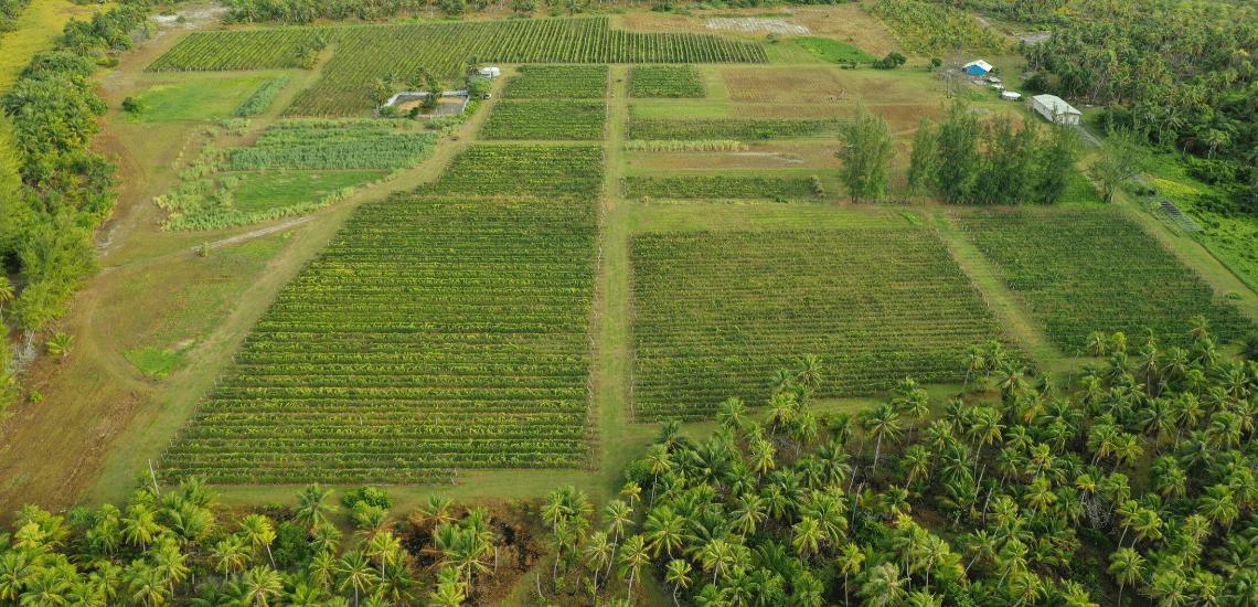 https://tahititourisme.ch/wp-content/uploads/2017/08/Vin-de-Tahiti_1140x550-min.png