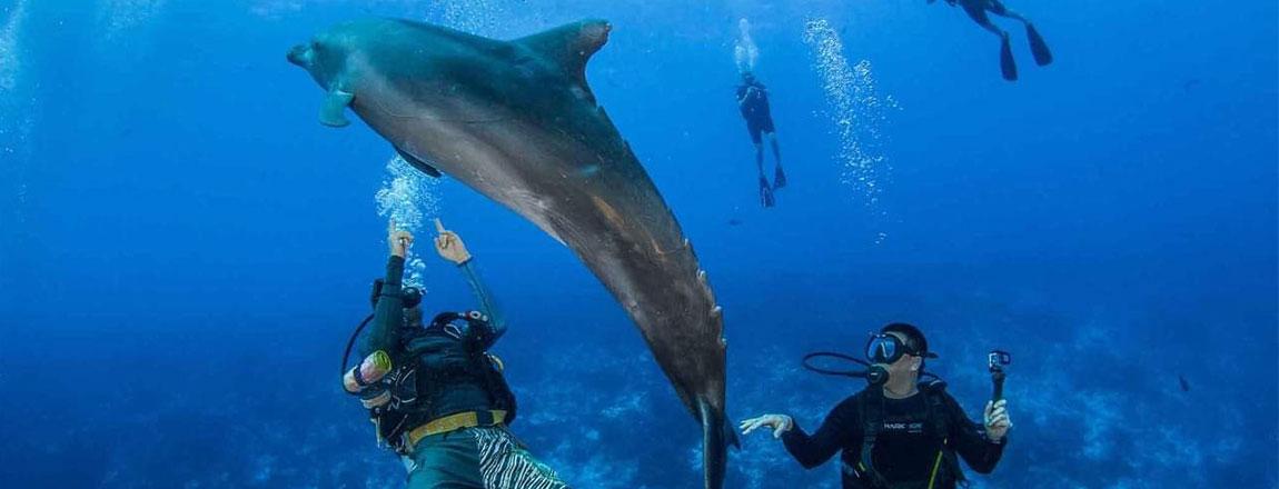 https://tahititourisme.ch/wp-content/uploads/2017/10/Rangiroa-Diving-Center-1150x440px.jpg