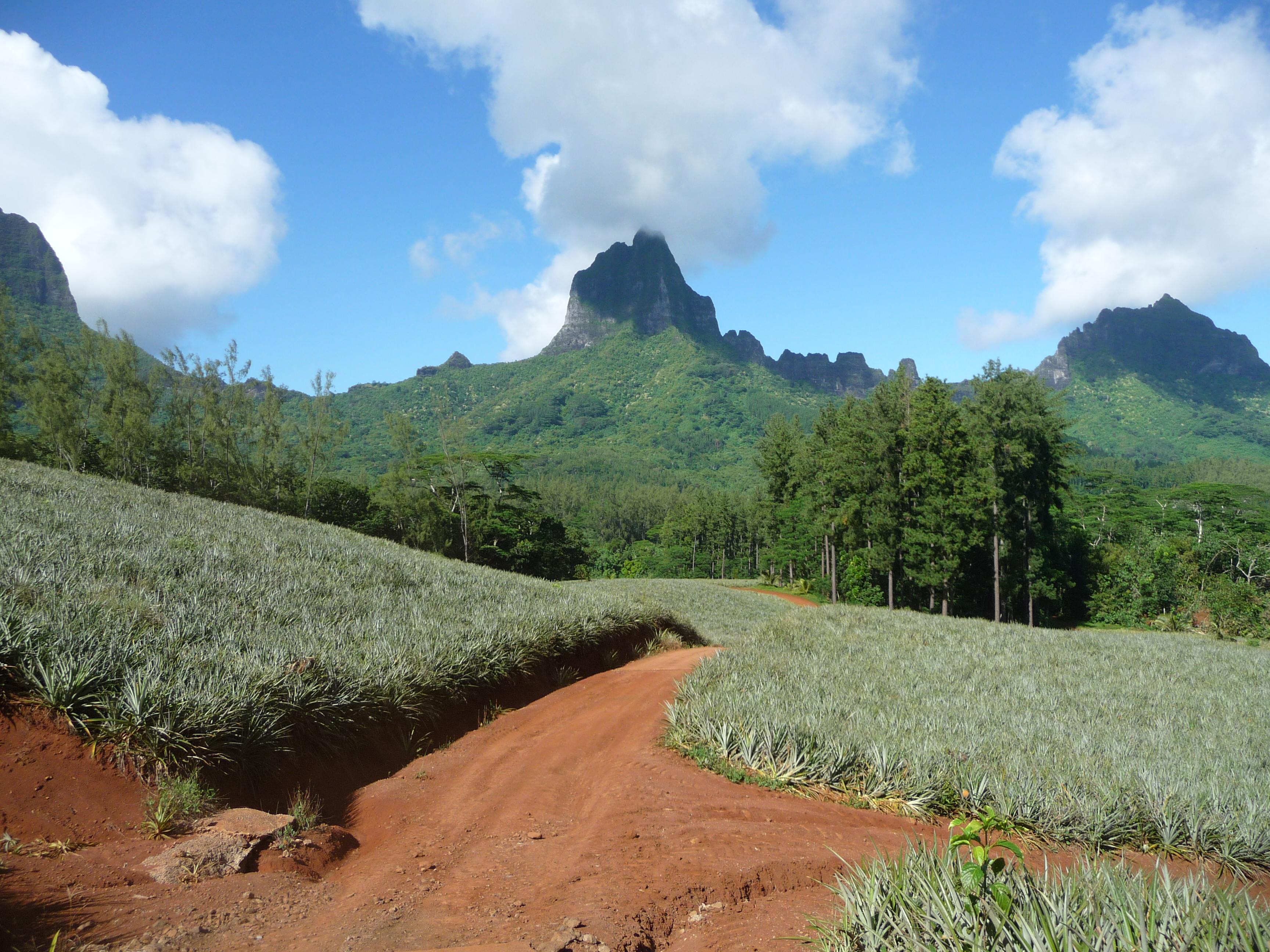https://tahititourisme.ch/wp-content/uploads/2018/01/2012-MOZ-Montagne-Magique-4.jpg