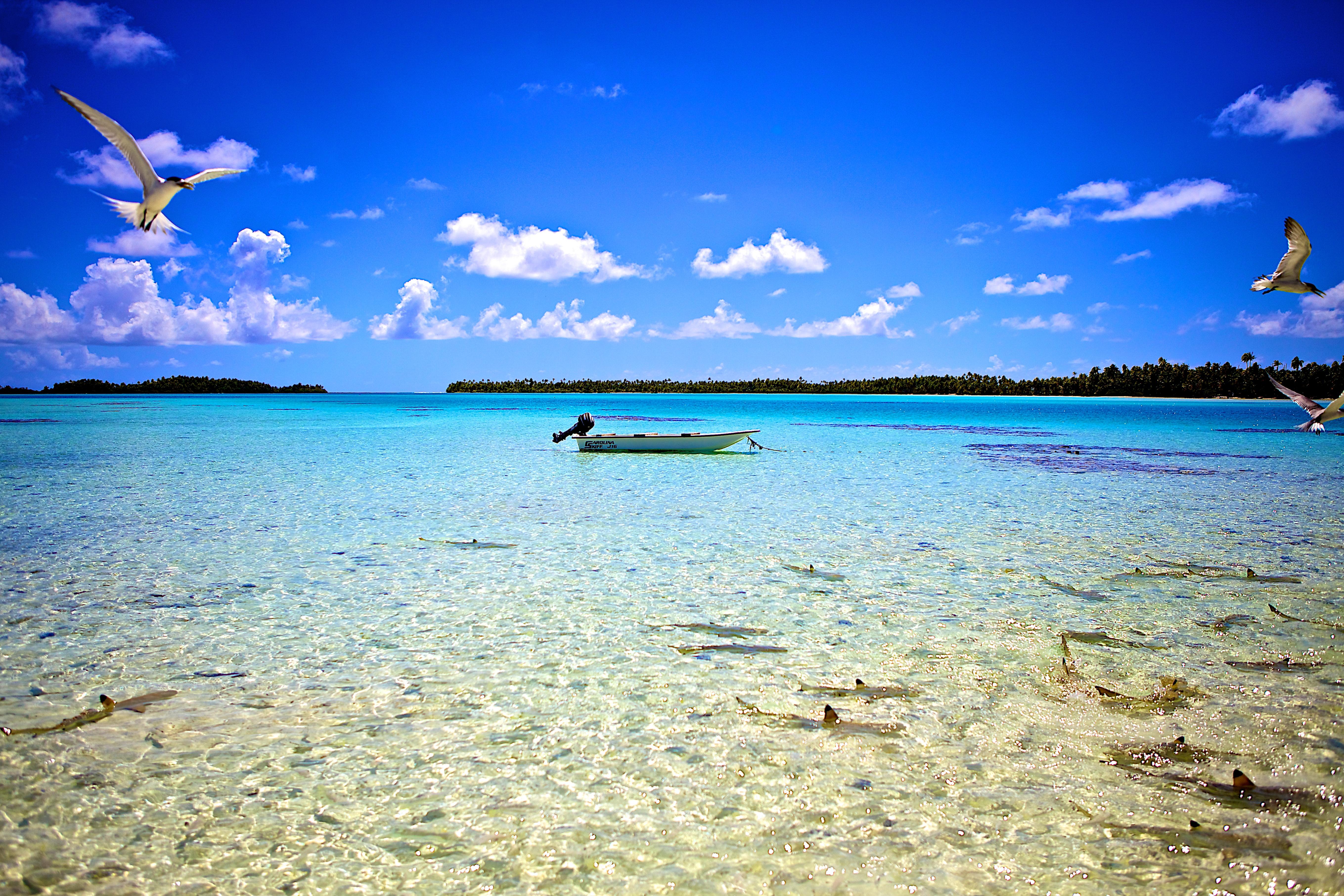 https://tahititourisme.ch/wp-content/uploads/2018/01/2012_RGI_H_Kia-Ora-Resort-4.jpg