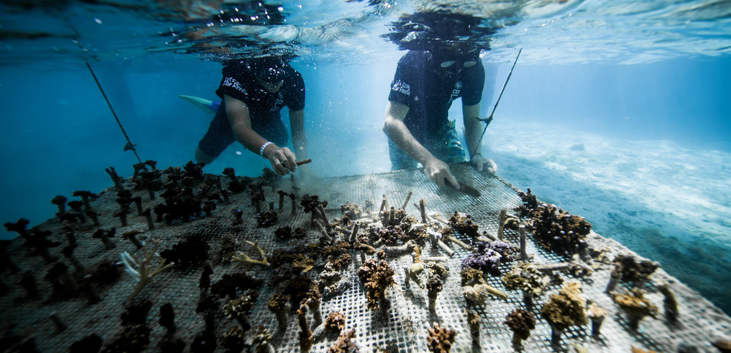 https://tahititourisme.ch/wp-content/uploads/2018/11/CoralGardeners-couv.jpg