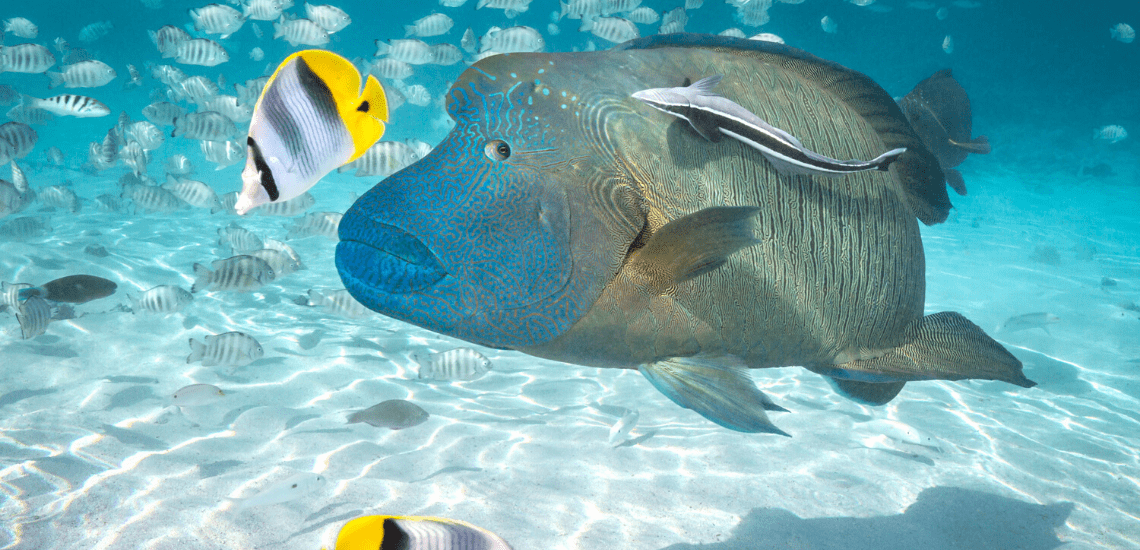 https://tahititourisme.ch/wp-content/uploads/2020/02/SnorkelingExpeditions2_1140x550-min.png