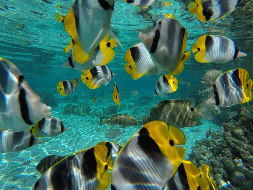 https://tahititourisme.ch/wp-content/uploads/2020/06/jardin-corail-tahaa-5.jpg